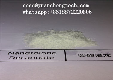 Trung Quốc Bodybuilding Nandrolone DECA Durabolin Powder Anabolic Steroid DECA / Nandrolone Decanoate nhà cung cấp